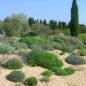 Jardin sec Fillipi. Crédit photo : Frédéric Hébraud, CAUE 34