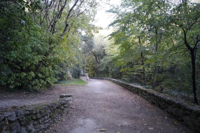 La forêt rivulaire sous le parc Méric. Crédit photo : AH, CAUE 34